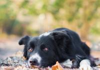 Kurz fotografování psů