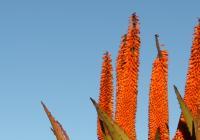 Prodejní výstava sukulentů a jiných exotických rostlin