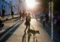 Zažít město jinak - Praha Nezamyslova