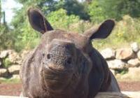 Den nosorožců