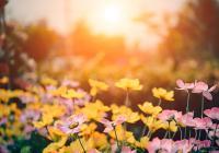 Fotografování květin s Topim Pigulou