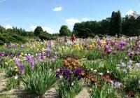 Průhonická botanická zahrada