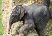 Mezinárodní den slonů v Zoo Praha
