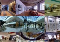 Zavřené muzeum není spící muzeum: Vybrané expozice