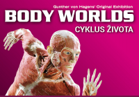 Body Worlds Cyklus života