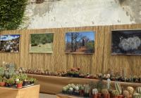 Výstava kaktusů na zámku Libochovice
