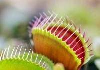 ŽIVÉ PASTI - výstava masožravých rostlin