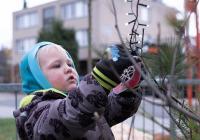 Komunitní zdobení vánočních stromků