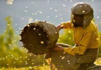 Kino: Země medu
