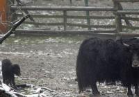 Zoo Brno od prosince otevřena