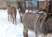 Zoo Dvůr Králové od prosince otevřena