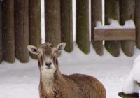 Zoo Hluboká od prosince otevřena