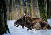 Od prosince otevřeno - Zoopark Chomutov