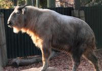 Zoo Liberec od prosince otevřena
