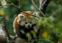 Zoo Ostrava - od prosince znovu otevřeno