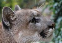 Zoo Plzeň od prosince znovu otevřena