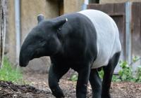 Zoo Ústí nad Labem od prosince znovu otevřena