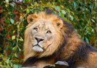 Zoo Zlín od prosince znovu otevřena
