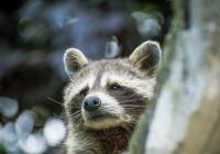 Zoo Tábor - od prosince znovu otevřeno