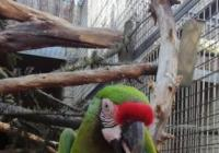 Otevření Papouščí zoologické zahrady Bošovice
