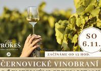 Černovické vinobraní s řemeslnými specialitami Slunečnice Food