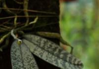 LIVE stream - Výstava orchidejí