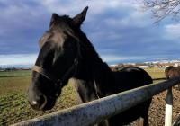 Hřebčín Slatiňany s výběhem koní