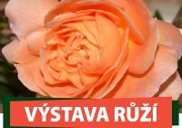 Výstava růží