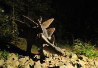 Noc v Dinoparku Vyškov