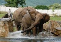 Den ve společnosti Canon v Zoo Zlín