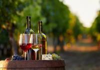Festival bio vín a sýrů Mikulov