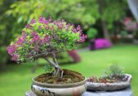 Nejlepší české bonsaje
