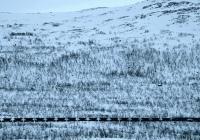 KINO: Kiruna – překrásný nový svět