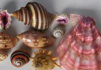 Prodejní výstava lastur a mořských přírodnin