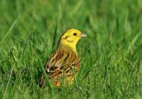 Ranní ornitologická vycházka
