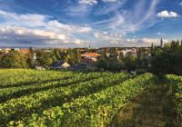 Nejlepší česká vína se představí v Praze na Suchdole