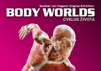 Body Worlds / Cyklus života