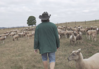 Živé kino Jihlava - Vlci na hranicích