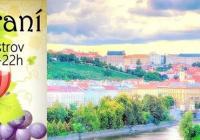 Vinobraní na Střeleckém ostrově