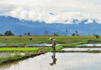 Rozvojový večer: Globální otázky kolem našich potravin