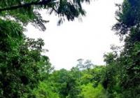 Peru - amazonská očista aneb 8 měsíců mezi šamany