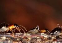 Ozvěny EKOfilmu: Svět podle termitů