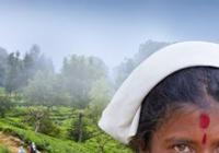 Martin Loew - Srí Lanka - ostrov čaje a slonů