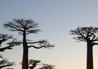 Madagaskar - Země krále Jelimána I Brno