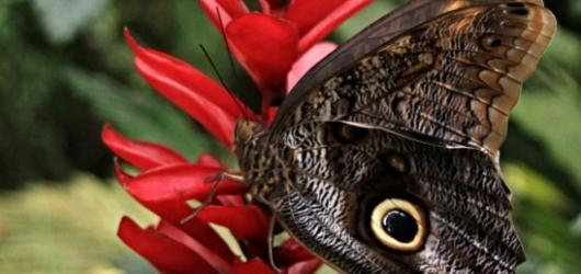 Požitek smyslů v pražské Botanické zahradě: Tropičtí motýli na dosah ruky