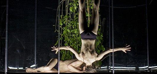 ČTP: Animal Exitus aneb když řečník převýší tanečníka
