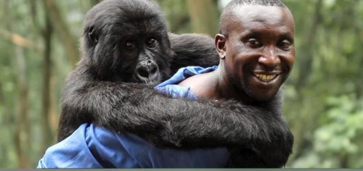 Diváckou cenu Jednoho světa získal film Virunga
