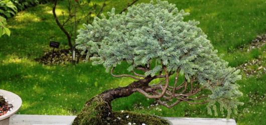 Unikátní bonsaje z Čech i ze zahraničí právě vystavují v Troji