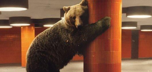 Berlinale volá: 67. ročník právě odstartoval ve vší velkoleposti!