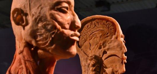Startuje výstava Body The Exhibition. Holešovické výstaviště zaplnily exponáty ze skutečných lidských těl